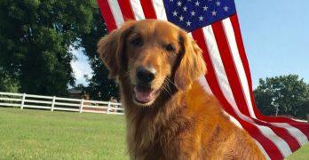 Sam, who portrayed Duke, the Bush's Baked Beans dog, has died