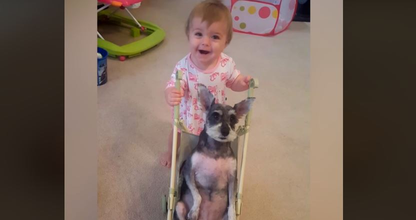 Babies and dogs: definitely the giggliest thing you'll see today!