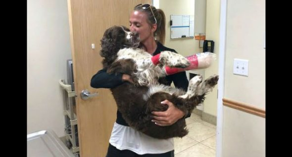 Hiker Carries Injured, Lost Dog Down Mountain & Changes Both Their Fates