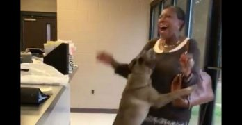 Watch that amazing moment when a lost dog and her person are reunited…!