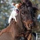 Dog and Pony Show: Terrier and her BFF are the best thing you'll see today!