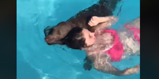 Just add water! A giggle-worthy compilation of swimming, splashing dogs.