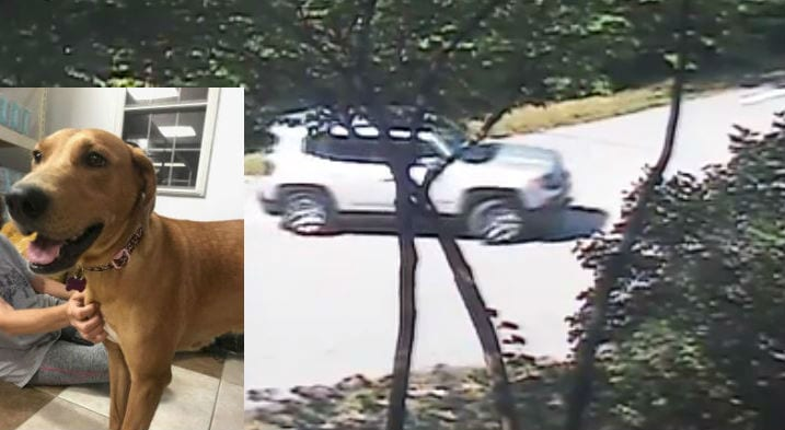 Someone dumped a dog near a Missouri man's house. And he got it all on video.