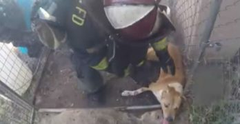 Dramatic body-cam video captures dog rescue from a California house fire