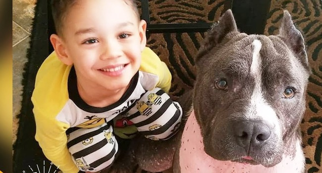 Watch Carlos' journey from sickly Puerto Rican street dog to beloved family nanny