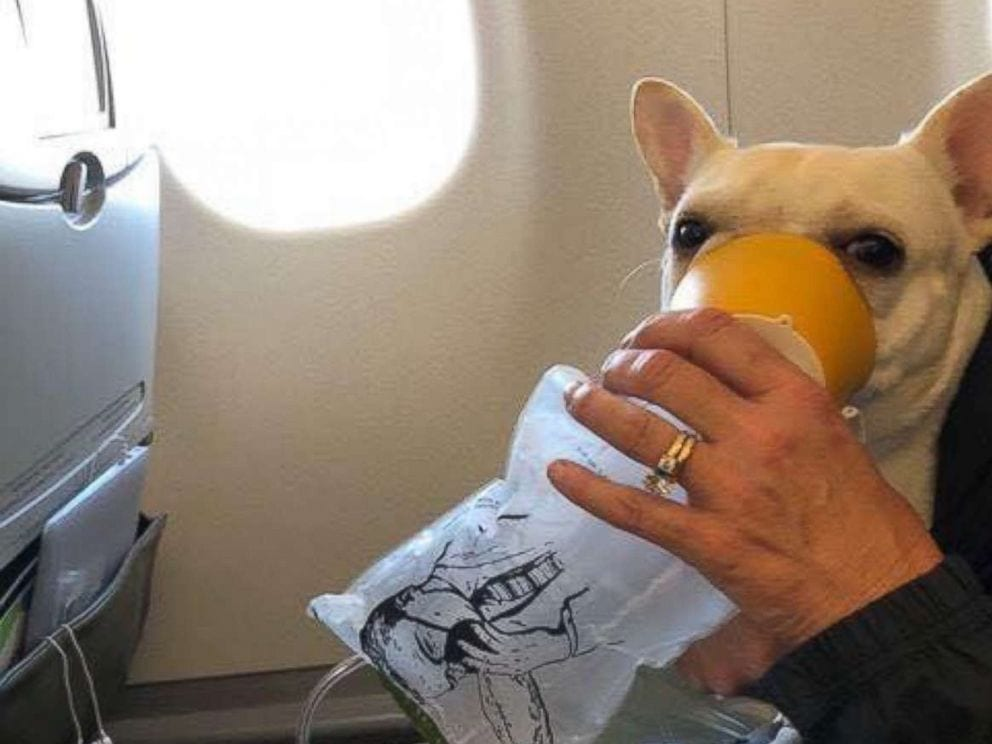 When Darcy had trouble breathing on the plane, the flight crew came to the rescue
