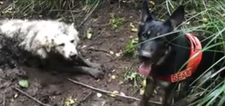 Puppy was trapped in the mud for two days before being rescued … by another dog!
