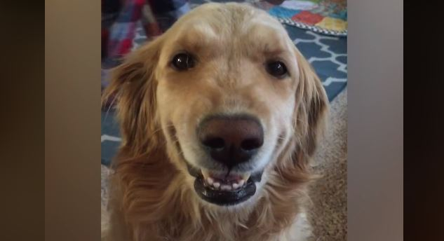 Can you watch this compilation of smiling dogs without cracking one yourself? We doubt it!