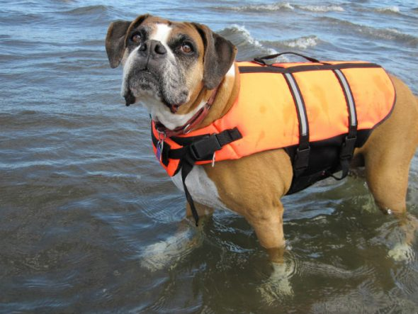 Florida pup swims three miles to security after falling off sailboat in storm
