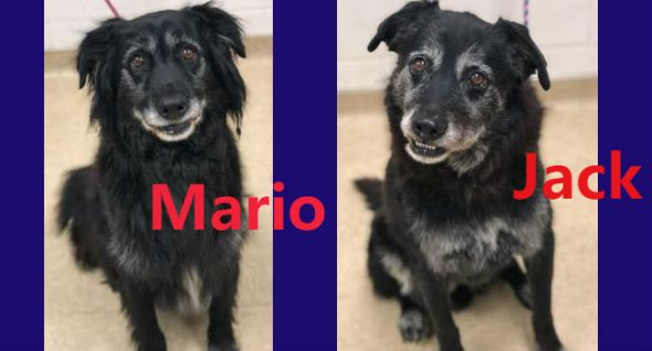 Lab Report: Bonded brothers Mario & Jack have discovered themselves in rescue at age 12
