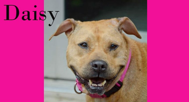 Adoptable! Daisy needs a forever garden where she can bloom.