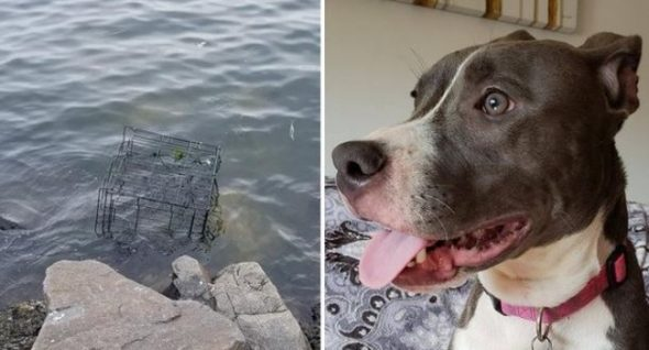 PUPDATE! The NJ canine left to drown in a cage is now in search of his eternally dwelling.