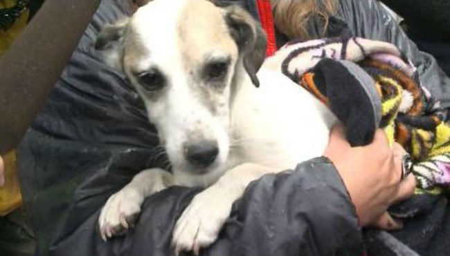 House (Rescue) Party! Dog stuck beneath home for 30 hours finally freed
