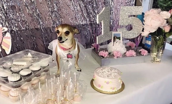 Lupita's Sweet 15: Texas woman throws quinceañera for her dog