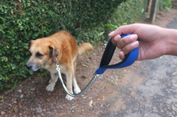 Higher scoop that proof! DNA testing to bust irresponsible canine homeowners is catching on