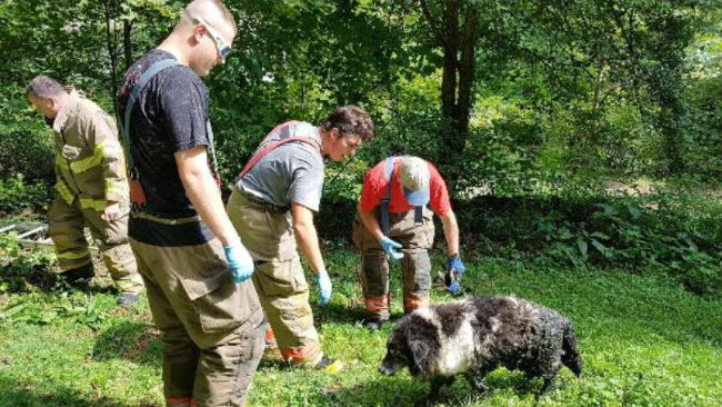 Stinky, but safe and sound. Dog in septic tank rescued by volunteer firefighters