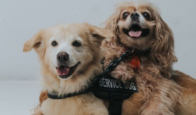 Blind dog has his own seeing-eye dog!