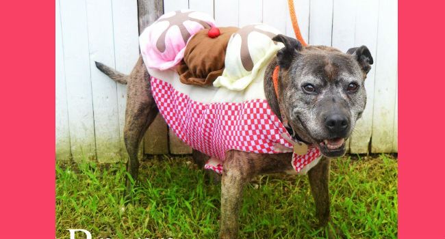 Adorable & adoptable: beautiful Brynn wants to be your couch-potato bestie