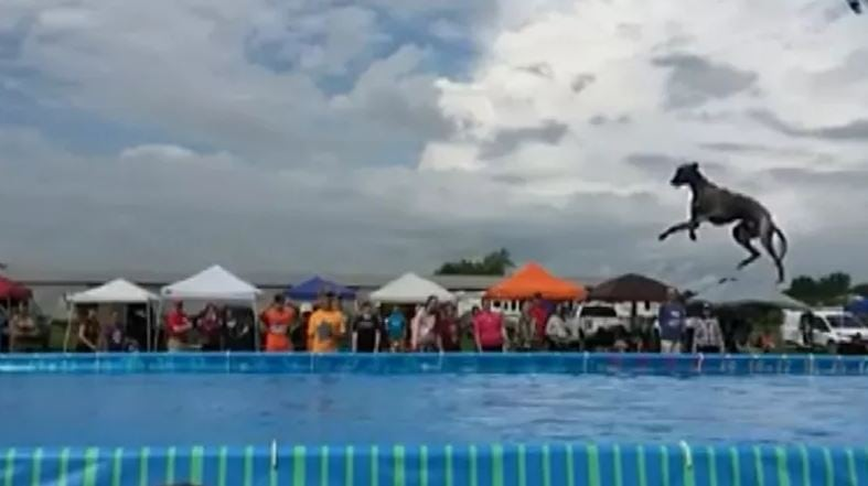 Amazing video: Michigan dog Slingshot sets world record for dock diving!