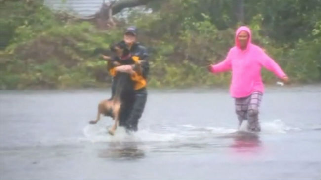 Reporter stops broadcast to help woman rescue therapy dog from flood waters