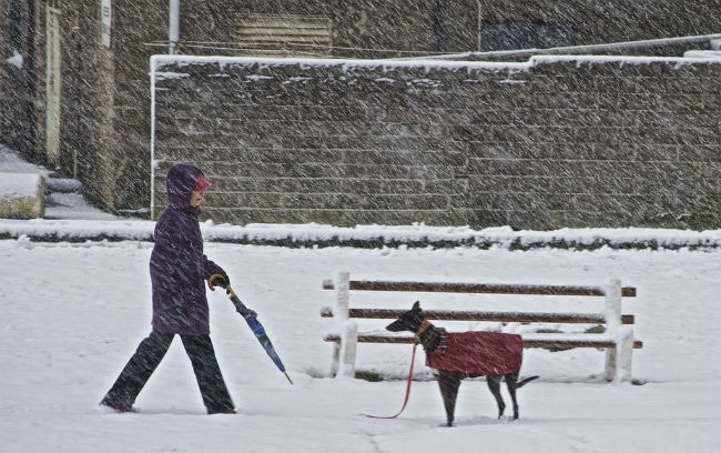 Snow day, no play? Indianapolis to open the state's first INDOOR dog park!