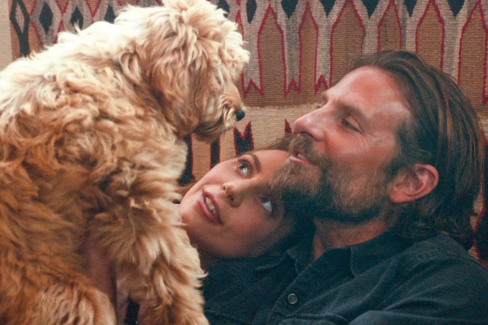 "Nepotism is so cute! Bradley Cooper casts his own rescue dog in ""A Star is Born."""