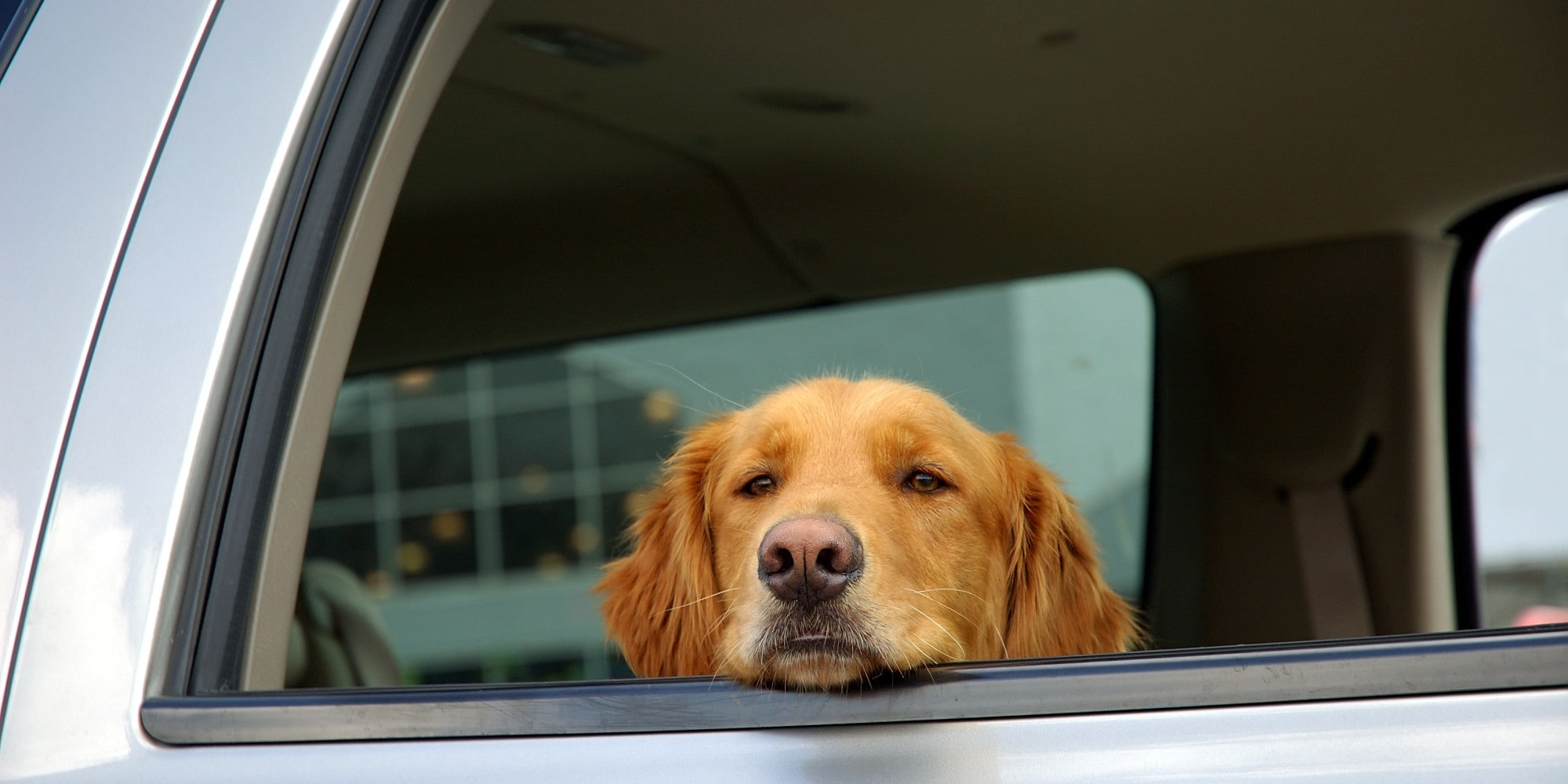 Dog Mode? A new Tesla feature could let passers-by know your dog is safe