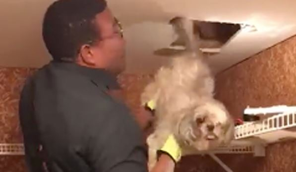 """A pawsitive outcome!"" Watch this firefighter rescue a dog from an HVAC duct"