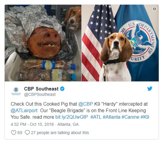 Pork it over! Homeland safety canine intercepts roasted pig head in traveler's baggage