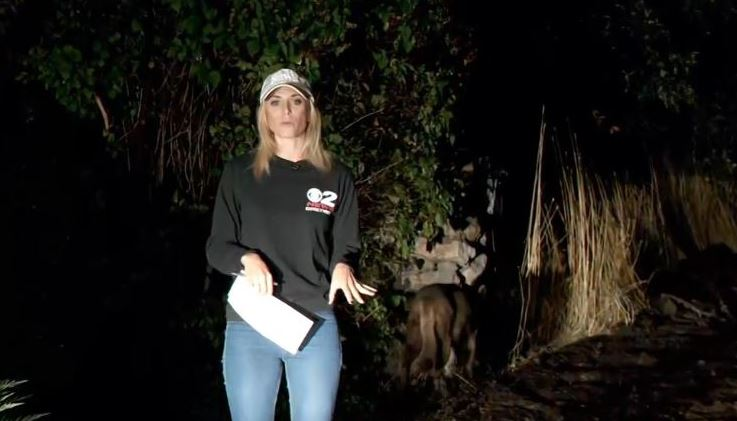 Dog or mountain lion? Animal that stirred controversy in reporter's live shot finally identified