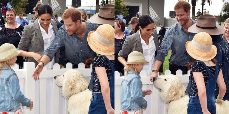 Prince Harry & Meghan Markle are meeting dogs all over Australia!