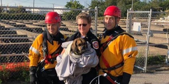 Lacking puggle discovered clinging to pipe above New Jersey water pit