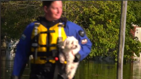 Rescuers kick in door to save stranded dog