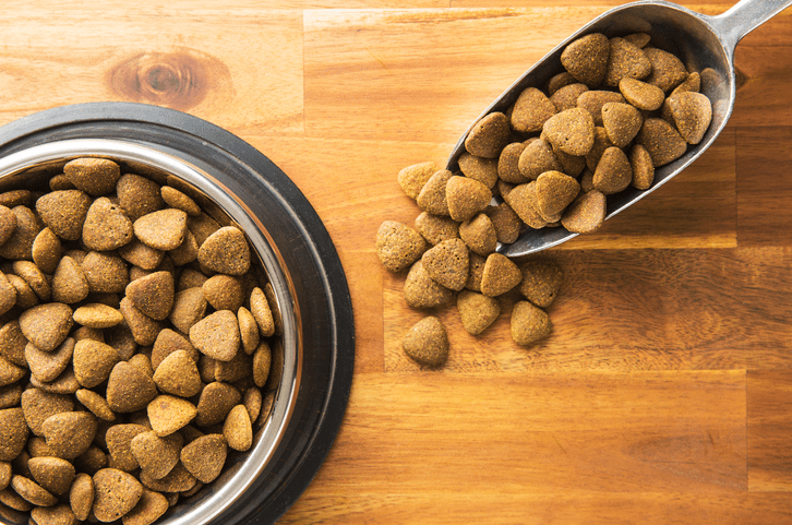 What's the Best Low-Protein Dog Food for Your Pooch?