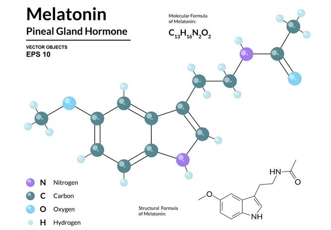 Melatonin for Your Dog