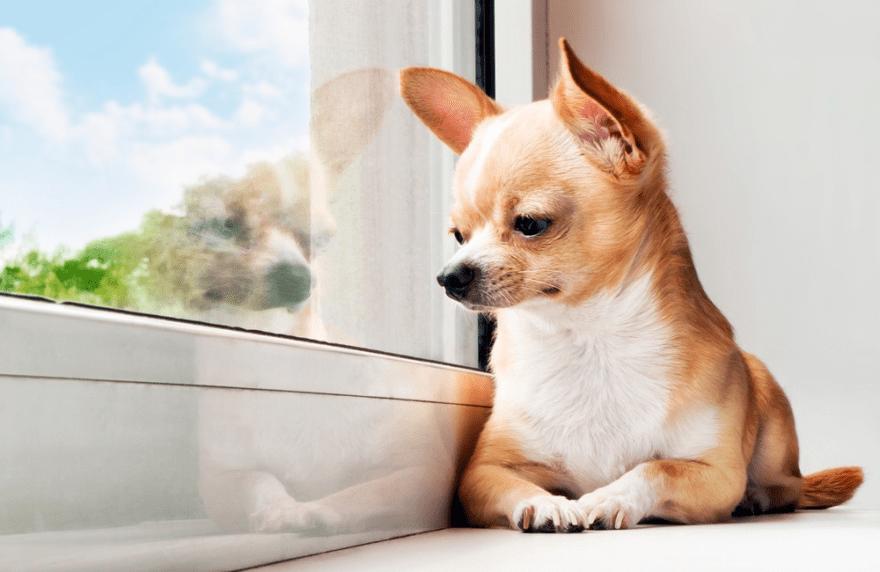 Miniature Dogs: Health & Food