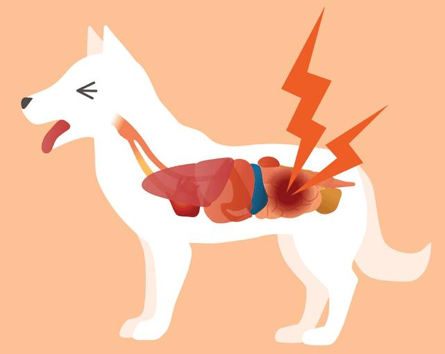 Meloxicam for Your Dog
