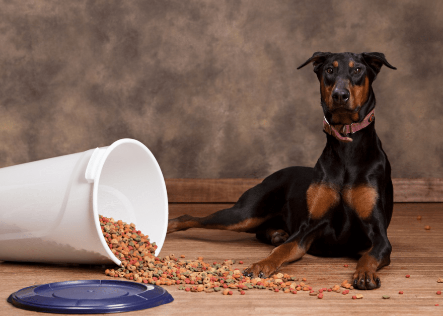 Best Dog Foods for Doberman Pinschers