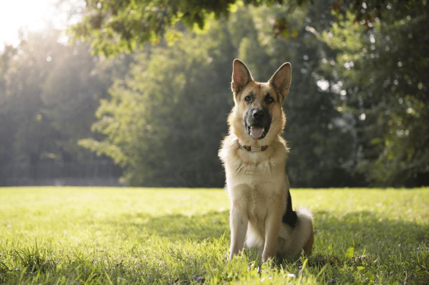 high-energy dogs